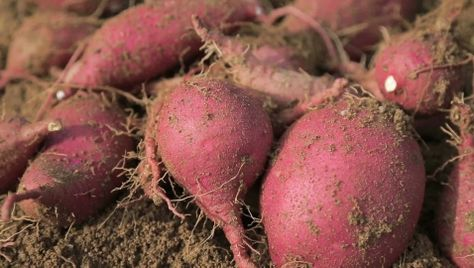 mit süßkartoffeln abnehmen