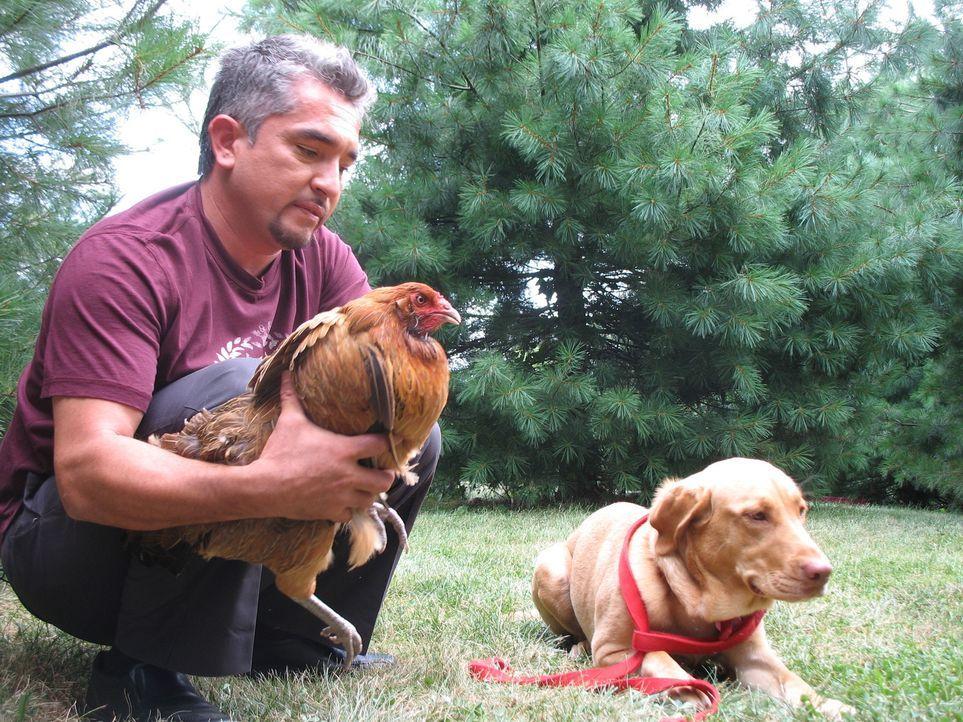 Die Hundedame Gracie will einfach nicht auf Frauchen hören und attackiert mittlerweile sogar die Haushühner. Kann Cesar (l.) ihr aggressives Verhalt... - Bildquelle: Rive Gauche Intern. Television