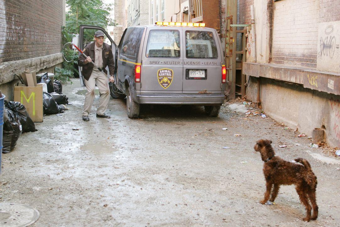 Gemeinsam mit Shane geht Rexx auf Brandstifterjagd ... - Bildquelle: New Regency Productions, Inc.