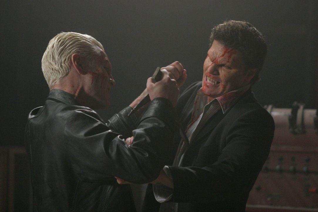 Zwischen Spike (James Marsters, l.) und Angel (David Boreanaz, r.) kommt es zu einem bitterlichen Kampf ... - Bildquelle: The WB Television Network