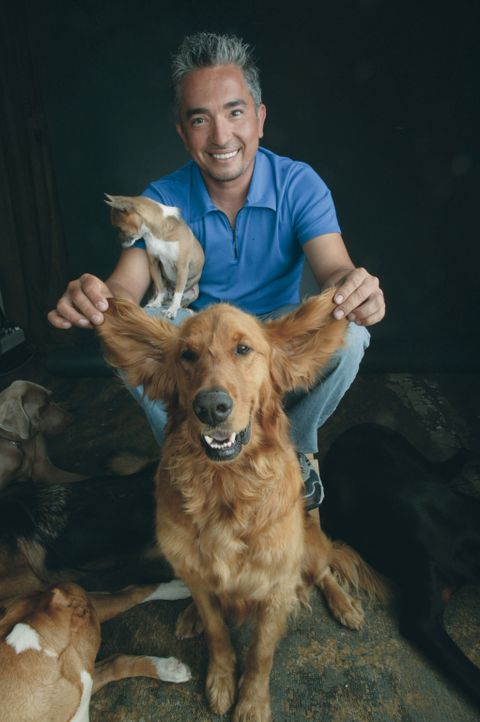 Egal ob Bello, Fiffi oder Wuffi, Cesar Millan hat für jeden Vierbeiner die passende Lösung parat. Der Hundeprofi ist momentan der berühmteste und... - Bildquelle: Rive Gauche Intern. Television
