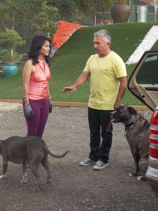 Marilyns (l.) Hund hat bereits zwei Mal andere Hunde im Hundepark angegriffen, ein weiteres Mal könnte ihr ein Zutrittsverbot einbringen. Cesar (r.)... - Bildquelle: NGC/ ITV Studios Ltd