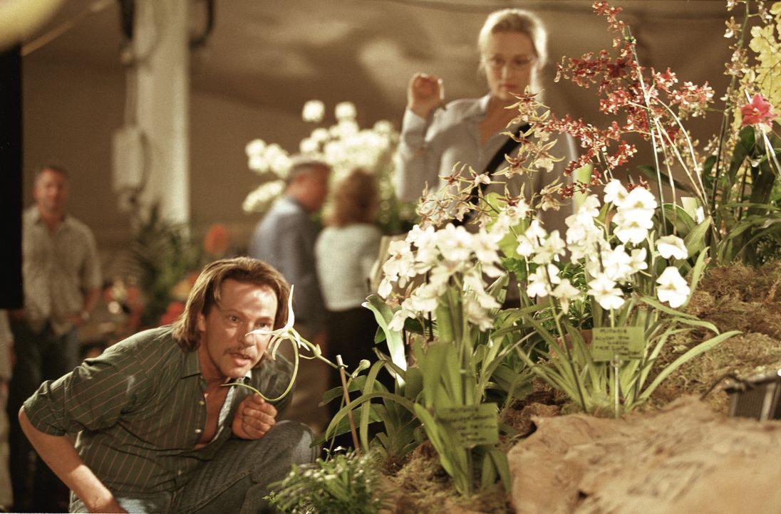 Susan Orlean (Meryl Streep, hinten) versucht von dem Orchideendieb Laroche (Chris Cooper, vorne) zu erfahren, was so faszinierend an diesen Blumen i... - Bildquelle: 2003 Sony Pictures Television International