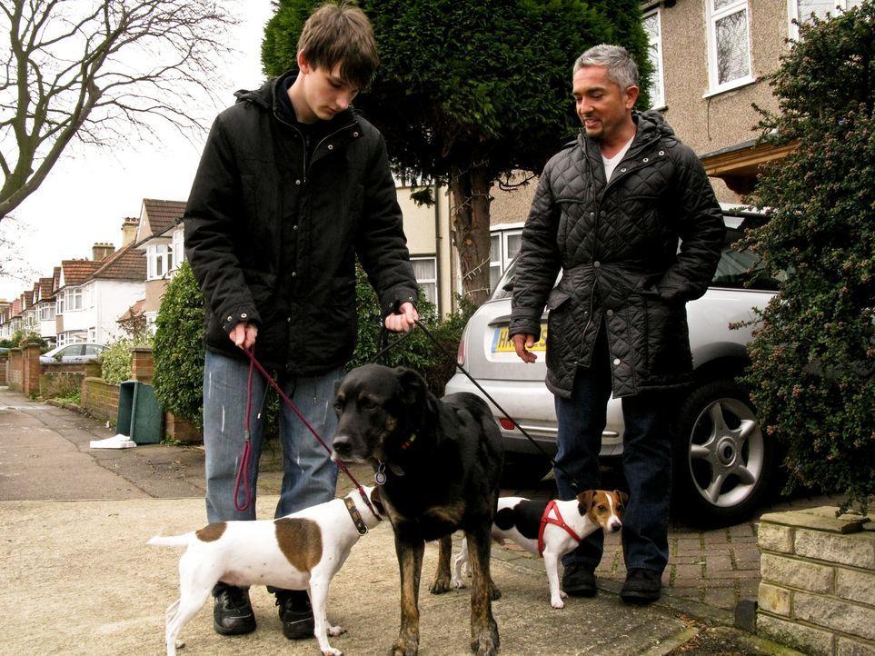 In Briten trifft Cesar Millan (r.) unter anderem auf den 17-jährigen Dominic. Nach dem tragischen Verlust seines ersten Hundes, gibt er sich bei se... - Bildquelle: 2014 Rive Gauche Television. All rights reserved.