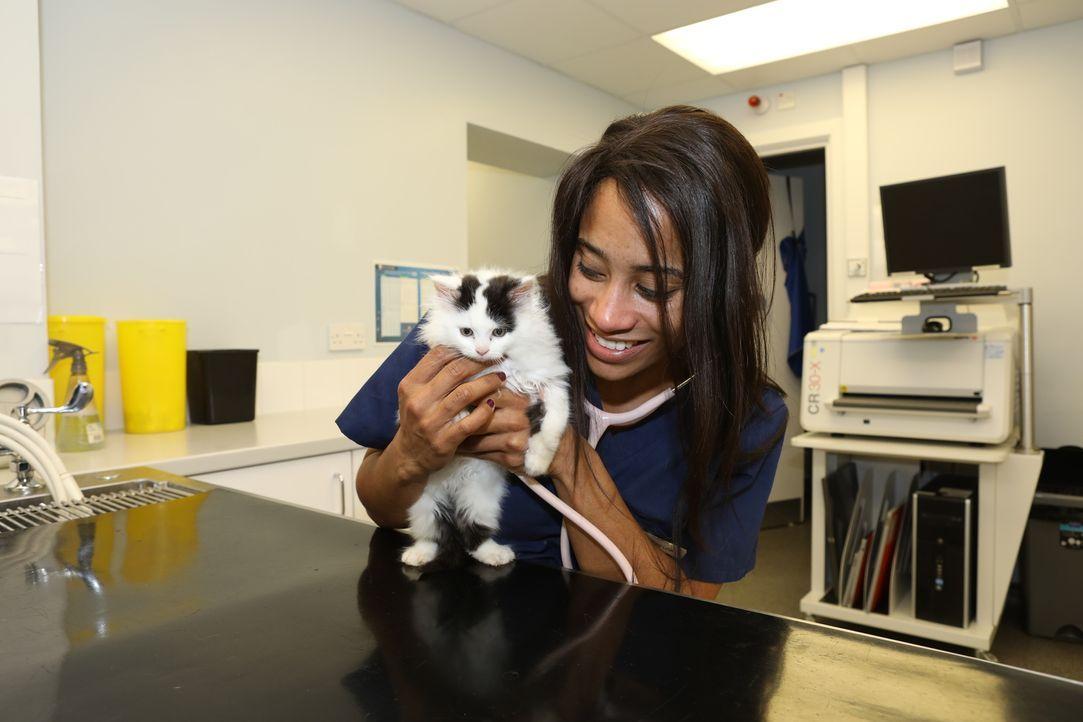 Cat untersucht einen Hund, dessen Ohr ziemlich geschwollen ist. Doch wie sol... - Bildquelle: True North