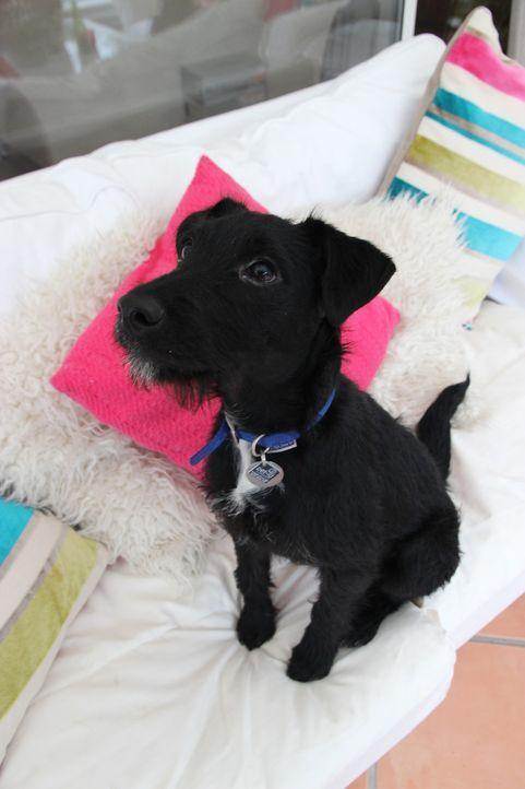 Projekt Superhund - Helfer auf vier Pfoten - Bildquelle: Plimsoll Productions USA, Inc.