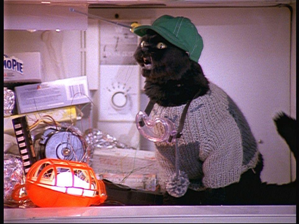 Salem (Bild) ist auf dem Selbstfindungstrip. Er weiß jetzt, dass seine wahre Bestimmung der Handwerksberuf ist. - Bildquelle: Paramount Pictures