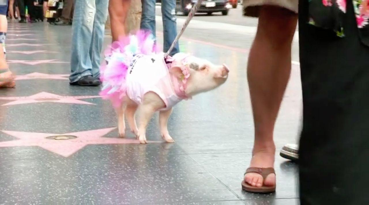 """""""Jetzt wird's tierisch"""" bringt die lustigsten Haustiervideos auf den Bildschirm, die die Besitzer von ihren Lieblingen aufgenommen haben ... - Bildquelle: sixx"""