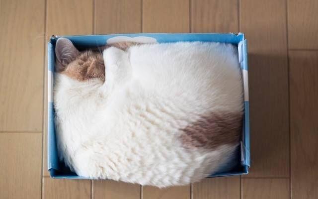 Schlaf-Katze 5