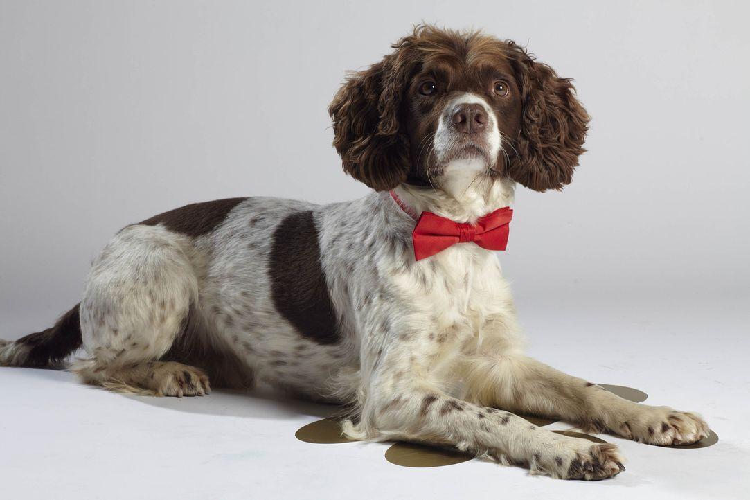 """Kann Hendrix die """"Top Dog Model?-Jury von sich überzeugen? - Bildquelle: 12 Yard Productions/ITV"""