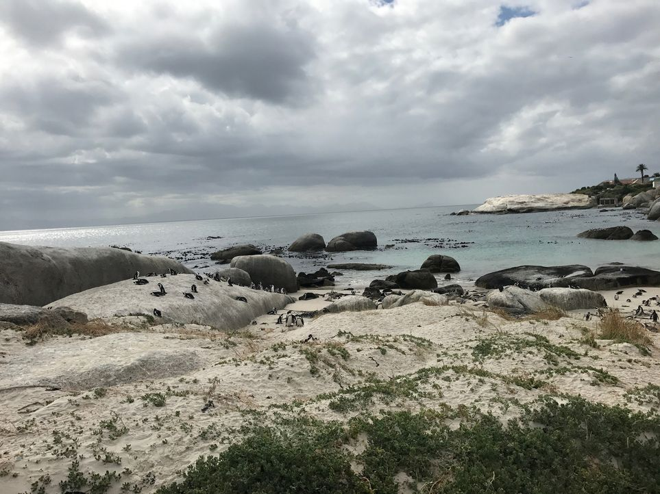 "Wilden Pinguinen ganz nah sein und sogar mit ihnen schwimmen: Das ist am ""Boulders Beach"" in Simon's Town nahe Kapstadt in Südafrika möglich ... - Bildquelle: 2017,The Travel Channel, L.L.C. All Rights Reserved"