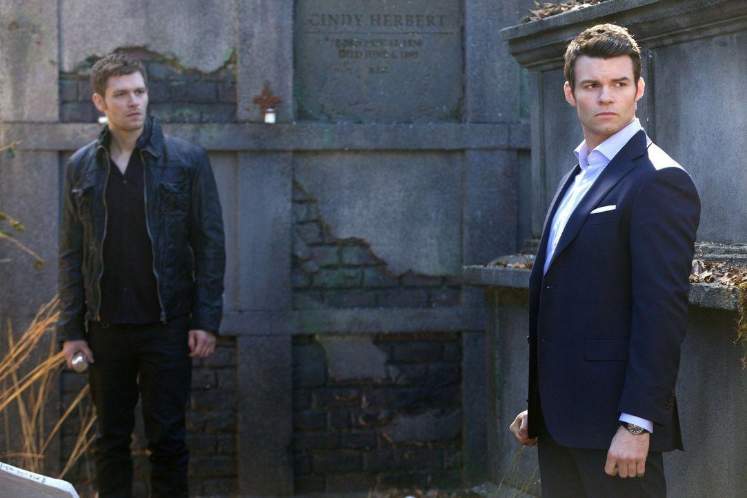Sie sind sich ähnlicher, als sie glauben: Elijah (Daniel Gillies, r.) und Klaus (Joseph Morgan, l.) ... - Bildquelle: Warner Bros. Television
