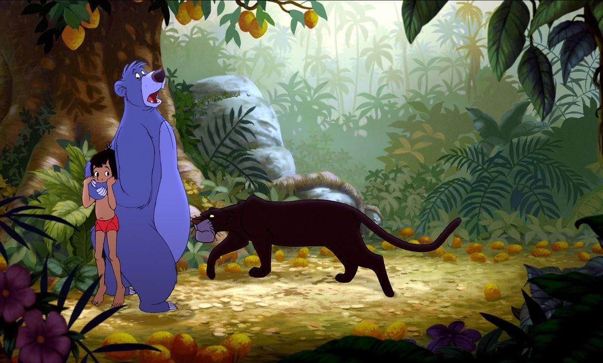 Der weise Panther Baghira (r.) ahnt, dass Balu (M.) etwas vor ihm verheimlicht. Wird er Mogli (l.) entdecken? - Bildquelle: Disney Enterprises, Inc. All rights reserved.