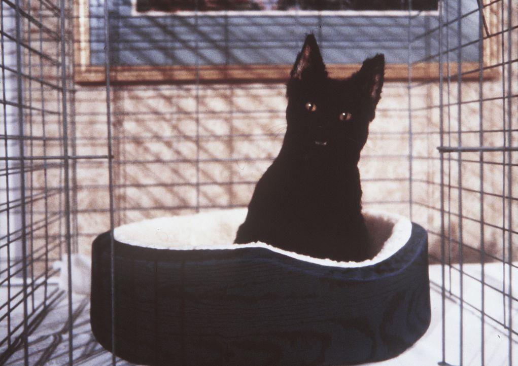 Der Kater Salem tritt bei einer Katzen-Show an, um den ersten Preis zu gewinnen und somit Sabrinas Geldprobleme zu lösen ... - Bildquelle: Paramount Pictures