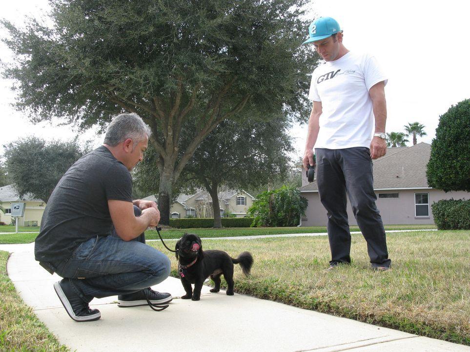 Heute stattet Cesar (l.) dem Rennfahrer Kevin Harvick (r.) einen Besuch ab. Familienhund Lo bellt fast ununterbrochen und schnappt nach jedem, der i... - Bildquelle: Ryan Cass MPH - Emery/Sumner Joint Venture