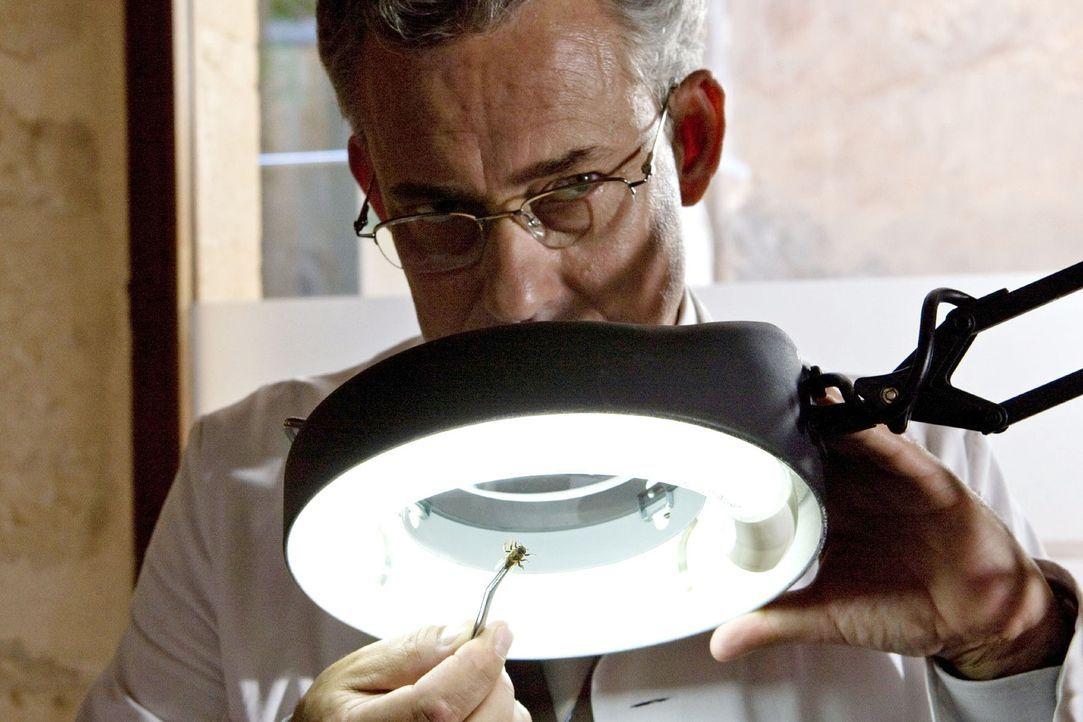 Karla sucht Hilfe im Entomologischen Institut. Kann Dr. Alvarez (Rolf Kanies) Auskunft über die Biene geben? - Bildquelle: Olaf R. Benold Sat.1