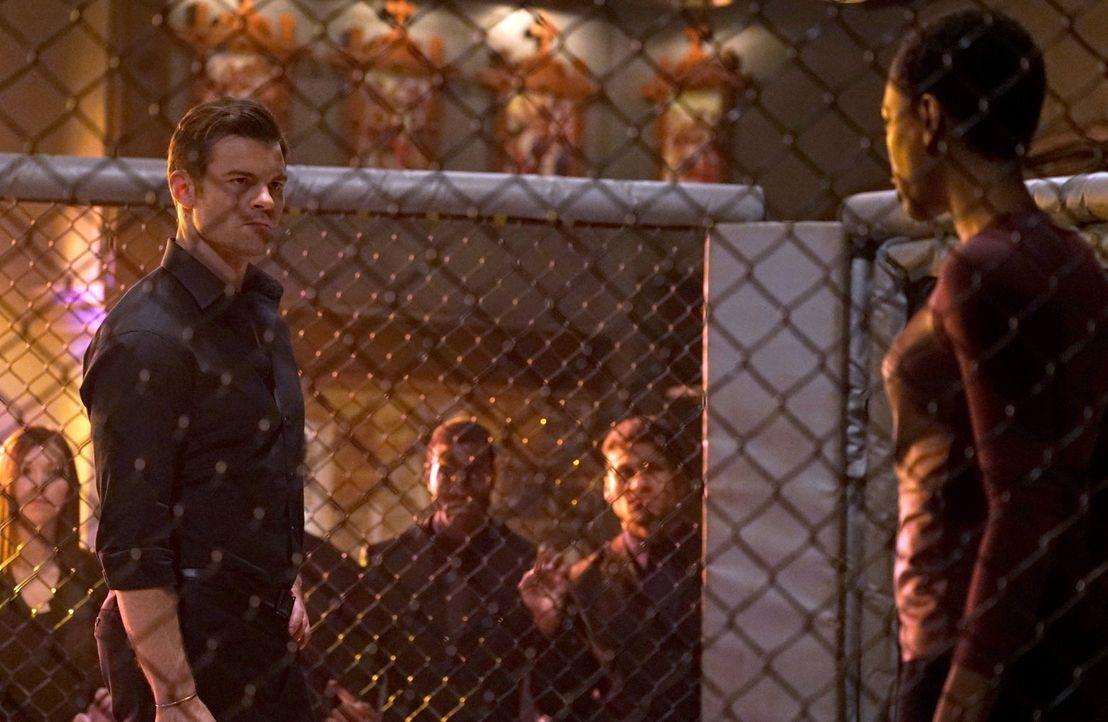 Nachdem Elijah (Daniel Gillies, l.) eine Hexe aus Ayas (Tracy Ifeachor, r.) Hexenzirkel ermordet hat, braucht diese dringend einen Ersatz. Doch die... - Bildquelle: Warner Bros. Entertainment, Inc.