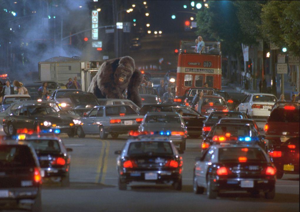 Mitten im turbulenten L.A. läuft der sanftmütige Gorilla Joe nach einem Unfall Amok ... - Bildquelle: Ron Batzdorff Disney Enterprises Inc.