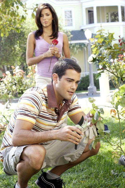 Bei John (Jesse Metcalfe, vorne) merkt Gabrielle (Eva Longoria, hinten), dass eine Rose mehr Wert haben kann, als ein neuer Wagen ... - Bildquelle: Touchstone Television