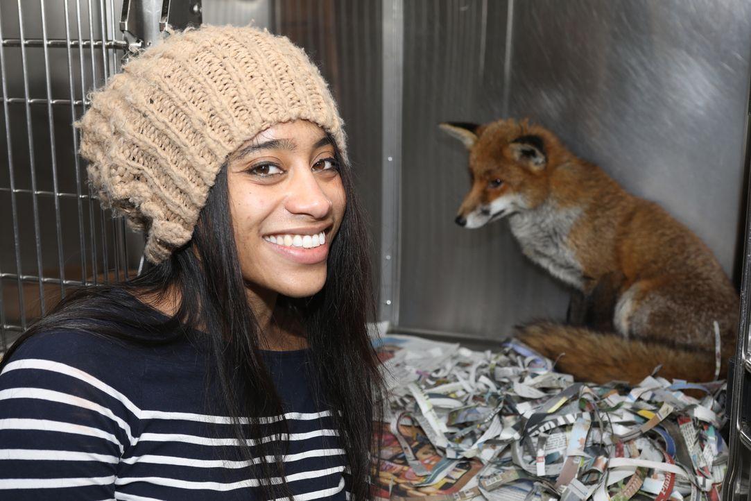 Cheryl möchte heute ein paar Füchse retten. Um die Tiere wieder aufzupäppeln... - Bildquelle: True North