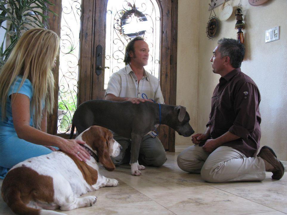In dieser Folge muss Cesar die Beziehungen zwischen Hund, Herrchen (M.) und Frauchen (l.) kitten. Auf dringlichen Wunsch ihrer Kinder hat sich das E... - Bildquelle: Rive Gauche Intern. Television