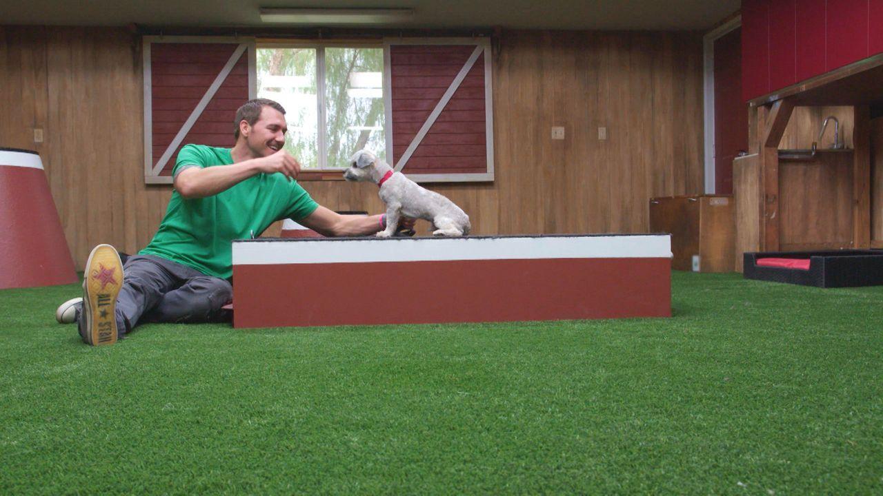 (3. Staffel) - Die Aufgabe scheint unmöglich: Auf seiner Lucky Dog-Ranch trainiert Brandon McMillan längst aufgegebene Tiere, um sie danach in die H... - Bildquelle: 2015 Lucky Dog. All Rights Reserved.