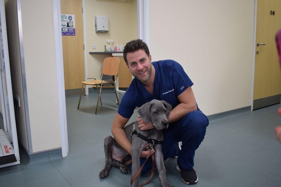 Heute ist Hamster Gilbert Cheryls Patient. Er hat eine große Schwellung an d... - Bildquelle: True North