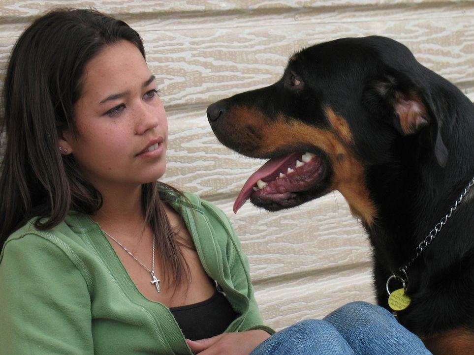 Der Rottweiler Apollo kommt nur mit Tierpflegerin Bree zurecht, alle anderen Menschen attackiert er. Ein Fall für Cesar Millan. - Bildquelle: Rive Gauche Intern. Television