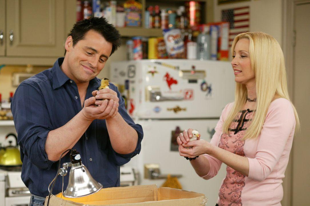 Wollen auch Eltern sein: Phoebe (Lisa Kudrow, r.) und Joey (Matt LeBlanc, l.) ... - Bildquelle: 2003 Warner Brothers International Television