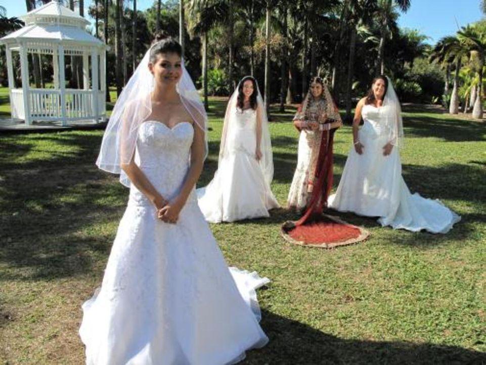 Vier Bräute treten an, im Wettkampf um das schönste Hochzeitsfest: Karen (r.), Vidya (2.v.r.), Maria (2.v.l.), Nataly (l.) - Bildquelle: 2009 Discovery Communications, LLC