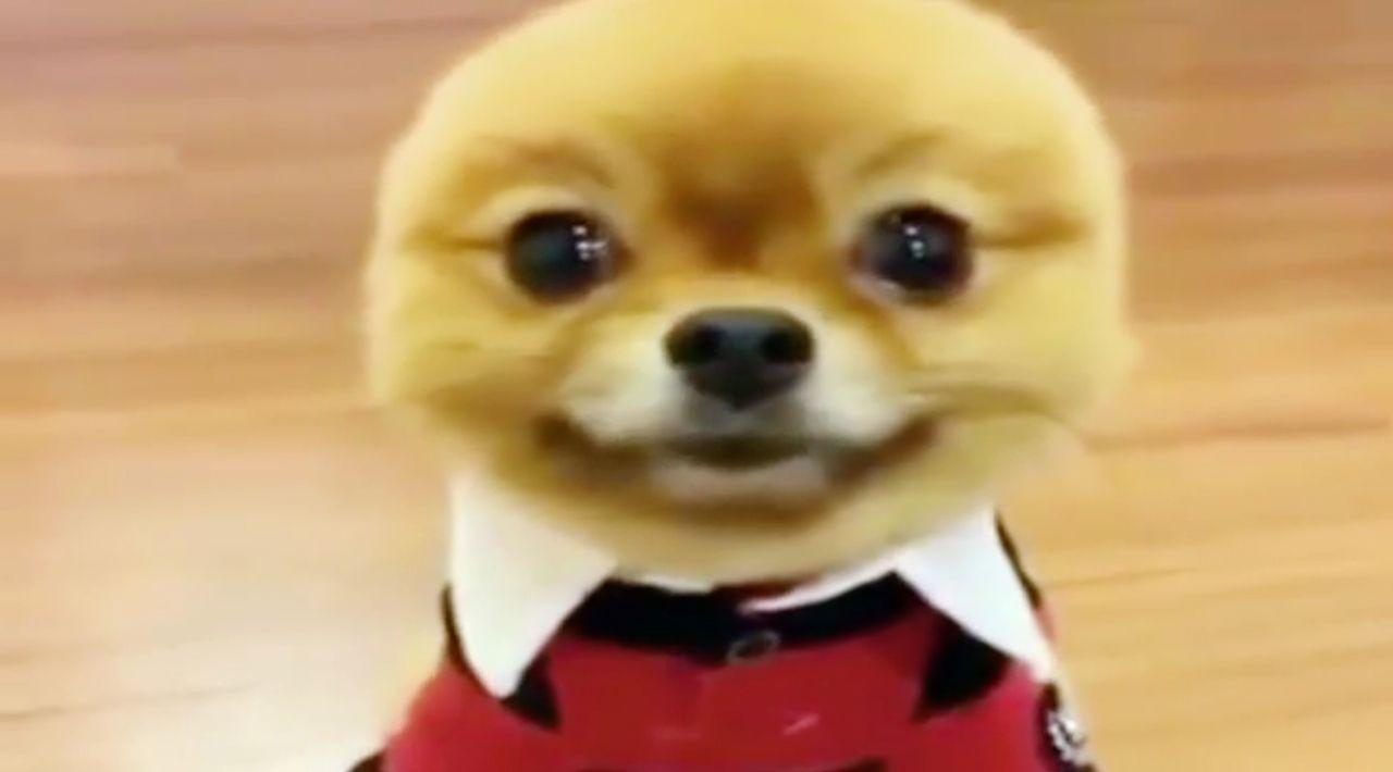"""""""Jetzt wird's tierisch"""" bringt die lustigsten Haustiervideos auf den Bildschirm, die die Besitzer von ihren Lieblingen aufgenommen haben ...etzt wir... - Bildquelle: sixx"""