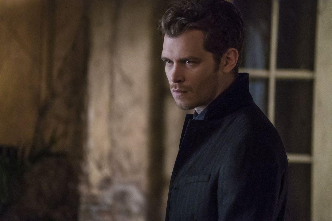 Klaus (Joseph Morgan) kommt dem Verbündeten des Bösen einen Schritt näher. Unterdessen macht Hayley eine Entdeckung ihre Eltern betreffend ... - Bildquelle: 2016 Warner Brothers
