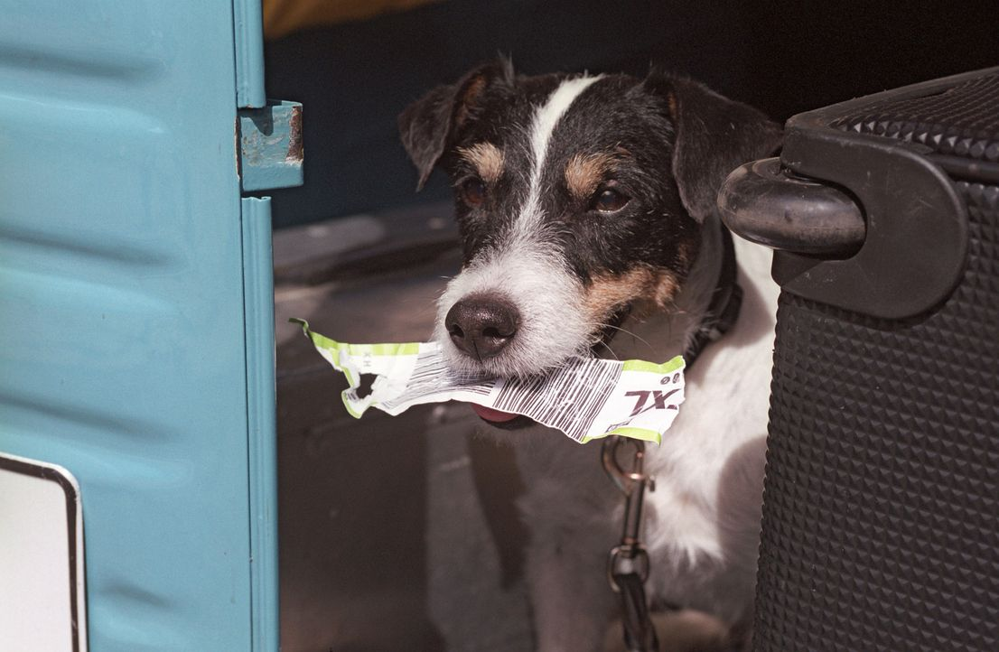 Mischlingshund Paulchen hat großen Appetit auf Papier und richtet damit einige Verwirrungen an. - Bildquelle: Sat.1