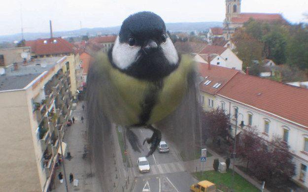Schwebend im Bild  - Bildquelle: bonestare.com/buzzfeed.com