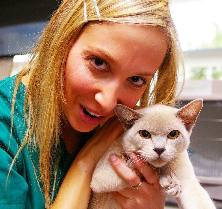 Das Leben einer kleinen Katze steht auf dem Spiel und die Ursache für ihre mysteriöse Krankheit ist noch nicht gefunden. Dr. Lisa Chimes gibt die Ho... - Bildquelle: WTFN Entertainment