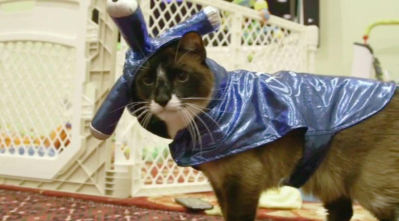 """""""Jetzt wird's tierisch"""" bringt die lustigsten Katzenvideos auf den Bildschirm, die die Besitzer von ihren Lieblingen aufgenommen haben ...t wird's t... - Bildquelle: sixx"""