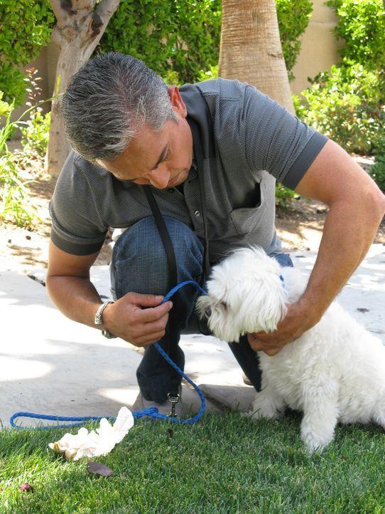 (5. Staffel) - Für Cesar Millan geht es nicht nur darum, Hunde auszubilden - es ist vielmehr ein Training für Hundebesitzer ... - Bildquelle: Rive Gauche Intern. Television
