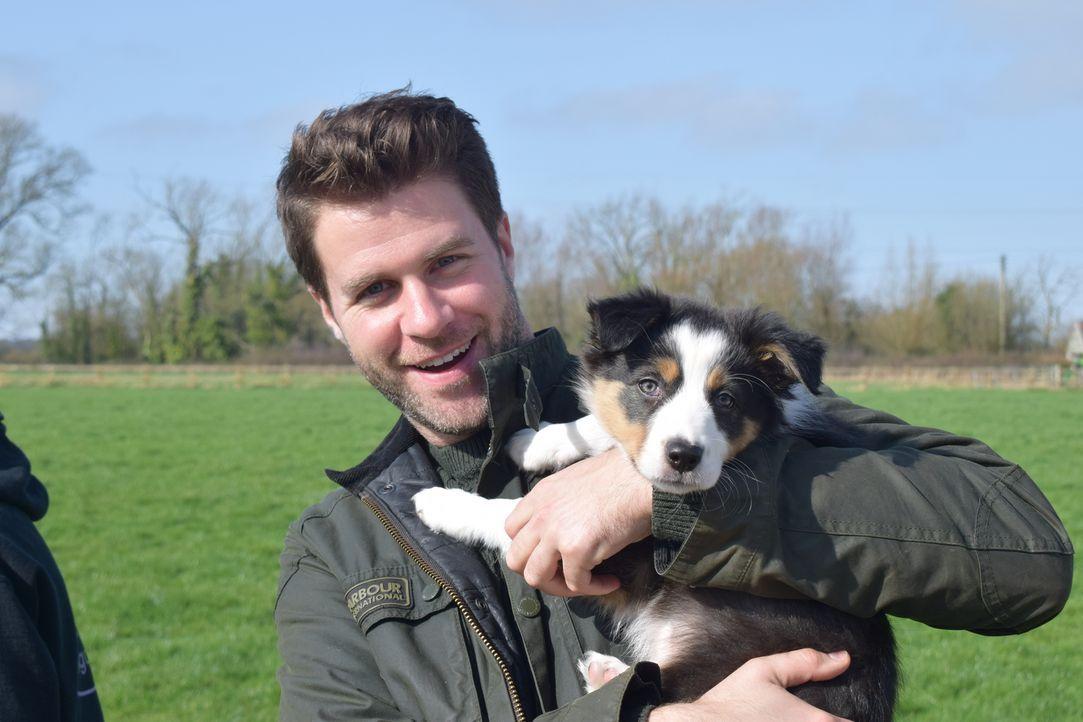 Hund Daisy hat keine Angst vor dem Tierarzt. Cat assistiert James, der sich ... - Bildquelle: True North