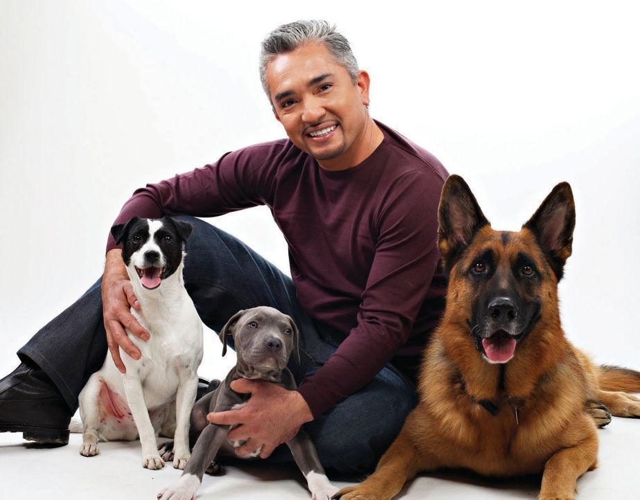 Cesar Millan mit drei Hunden