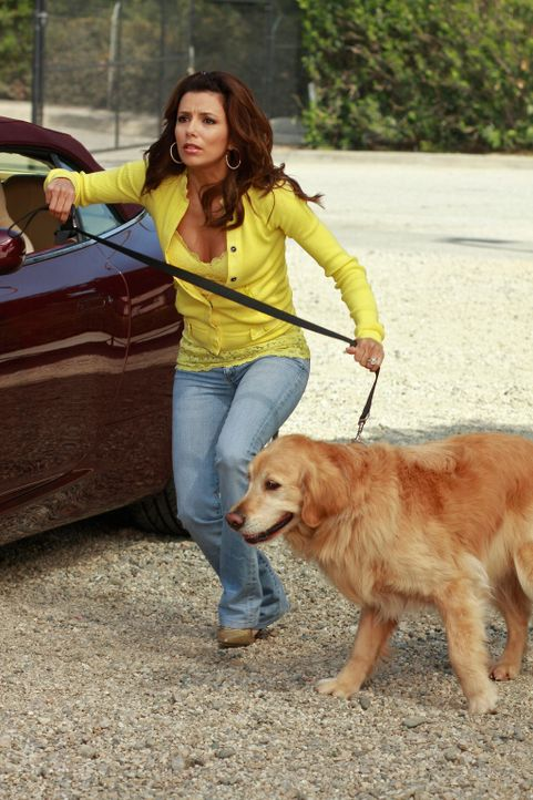 Gabrielle (Eva Longoria) bekommt eine Rivalin in Gestalt des Blindenhundes Roxy. Nachdem Roxy sie mehrmals angeknurrt hat, wenn sie Carlos schlecht... - Bildquelle: ABC Studios