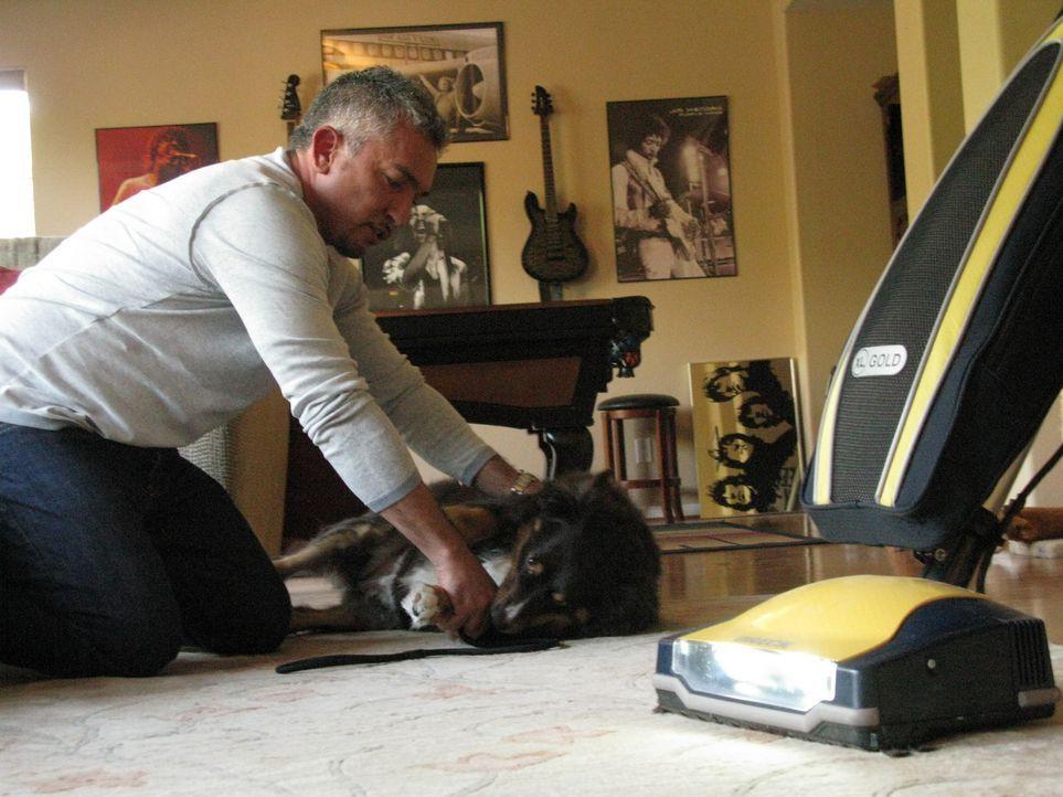 Der australische Schäferhund Abbie kann bestimmte Geräusche im Haushalt nicht ertragen. Kann Cesar Millan helfen? - Bildquelle: Neal Tyler MPH - Emery/Sumner Joint Venture