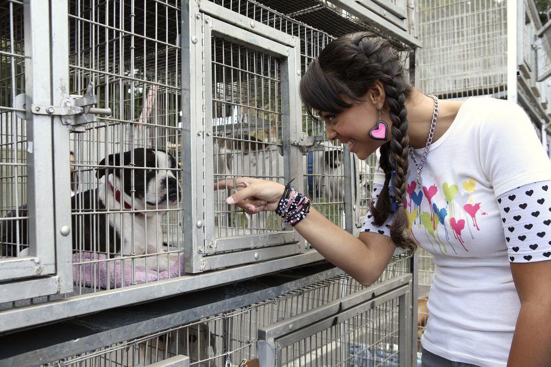 Genießt ihre Arbeit im Tierheim: Ashleigh (Amber Stevens) ... - Bildquelle: ABC Family