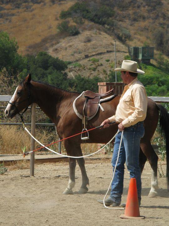 Auf einem Pferdehof, der gleichzeitig als Betreuungsstätte für geistig und körperlich behinderte Menschen dient, gibt es sowohl Probleme mit den Hun... - Bildquelle: Rive Gauche Intern. Television
