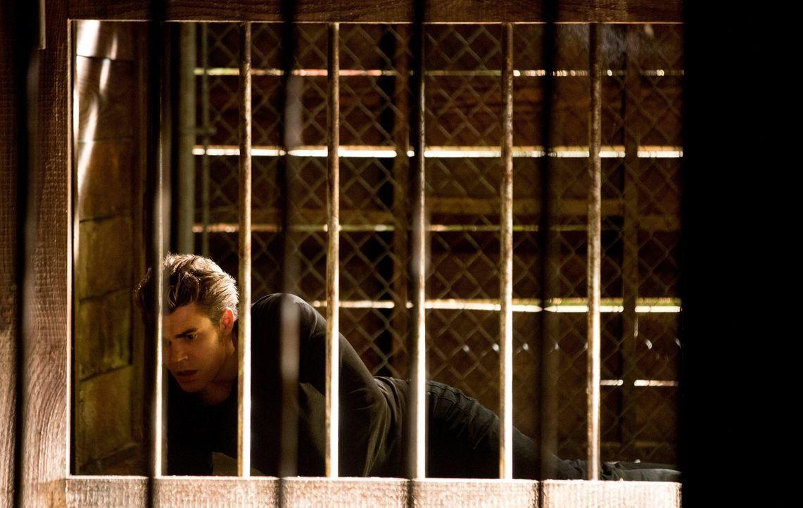 Mit seinen letzten Kräften versucht Stefan (Paul Wesley) Elena  zu helfen, koste es was es wolle ... - Bildquelle: Warner Brothers
