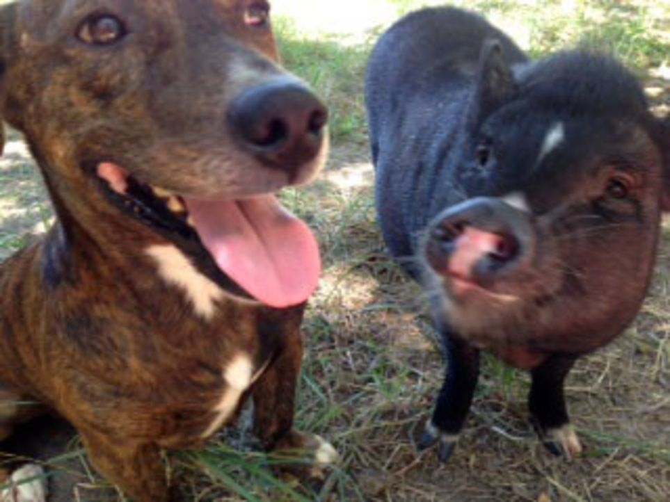 Eine Ziege und ein Schwein sind die besten Freunde und ein Hund lässt sich g... - Bildquelle: Whitney Hanson National Geographic Channels. All Rights Reserved./  Whitney Hanson