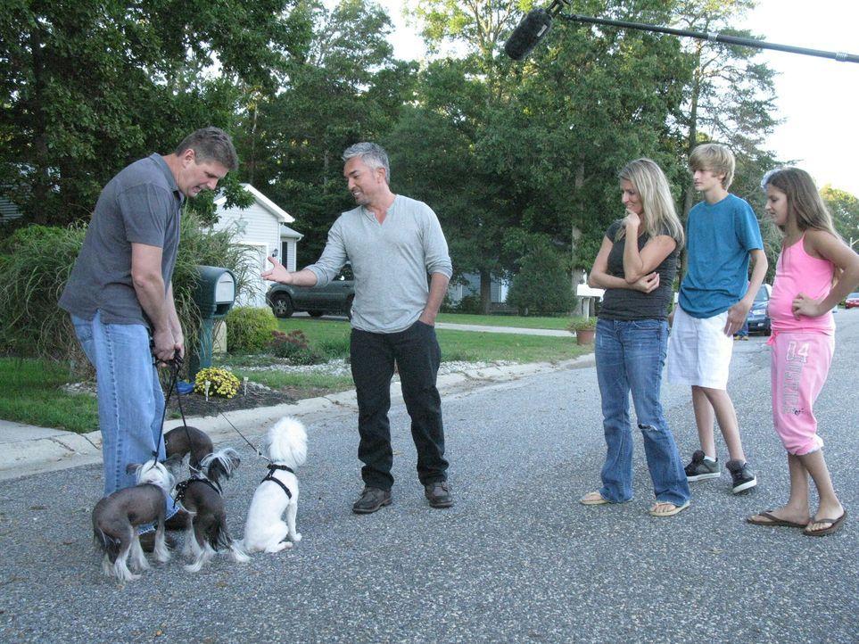 Vier aufgeregte Chinesische Schopfhunde warten auf Cesars (2.v.l.) Ankunft. Die Hunde verwandeln das Zuhause ihrer Besitzer in das reinste Chaos. - Bildquelle: Ryan Cass MPH - Emery/Sumner Joint Venture
