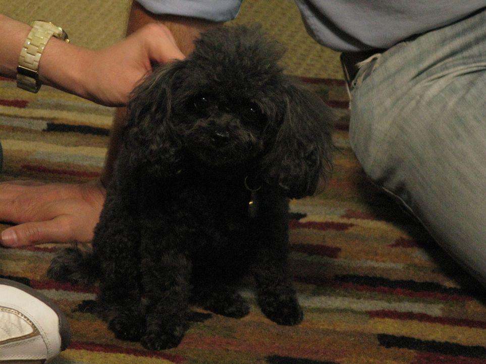 Tanéa liebt ihren Teacup Pudel Tucker, doch der Hund bereitet ihr und ihrem Freund Bret große Probleme. Kann Cesar Millan helfen?