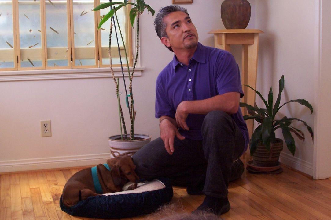 Der Hundeflüsterer Cesar Millan kümmert sich heute um einen  überaus aggressiven Dackel ... - Bildquelle: Rive Gauche Intern. Television
