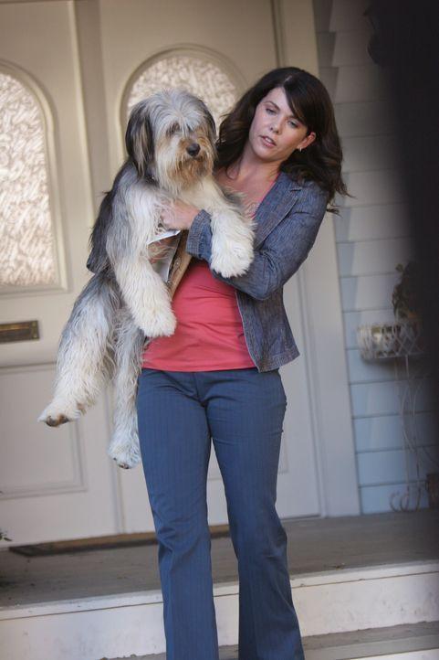 Der eigenwillige Paul Anker lässt Lorelai (Lauren Graham) den Schmerz über den Streit mit Rory vergessen ... - Bildquelle: Copyright Warner Brother International Television