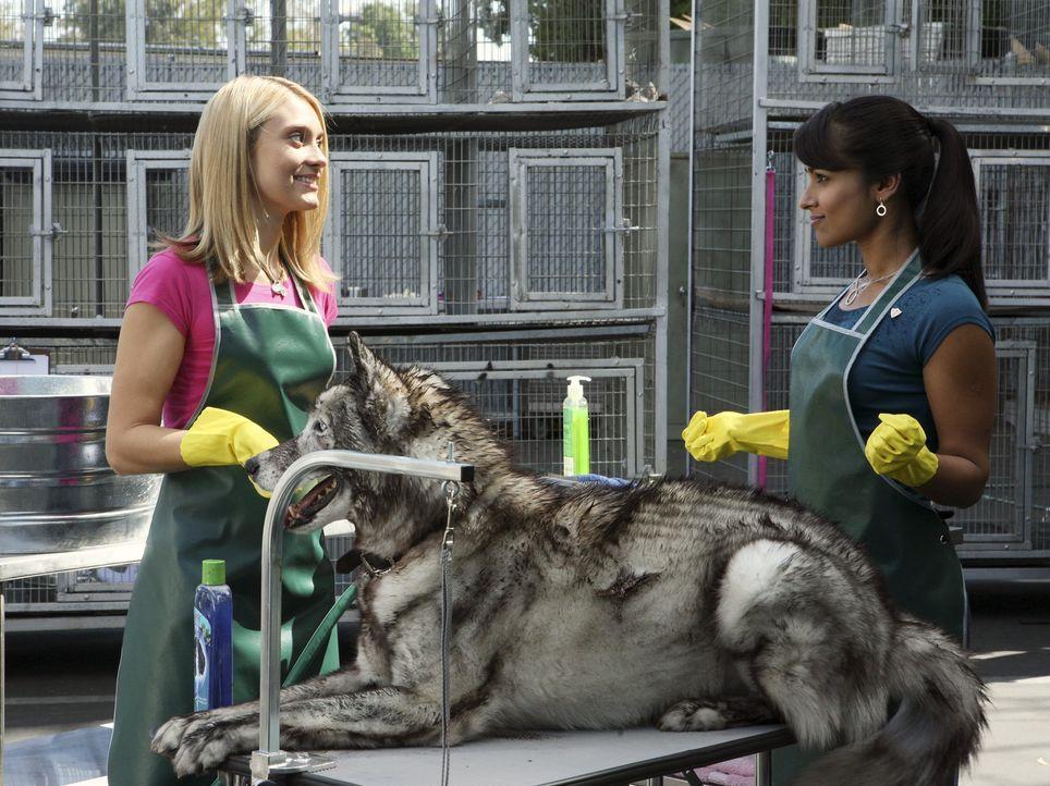 Freiwillige Sozialarbeit im Tierheim: Rebecca (Dilshad Vadsaria, r.)  und Casey (Spencer Grammer, l.) ... - Bildquelle: ABC Family